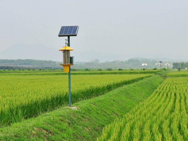 太陽能殺蟲燈1
