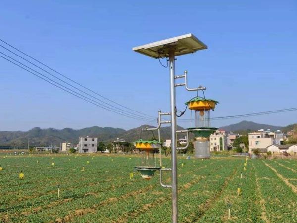 太陽能殺蟲燈7