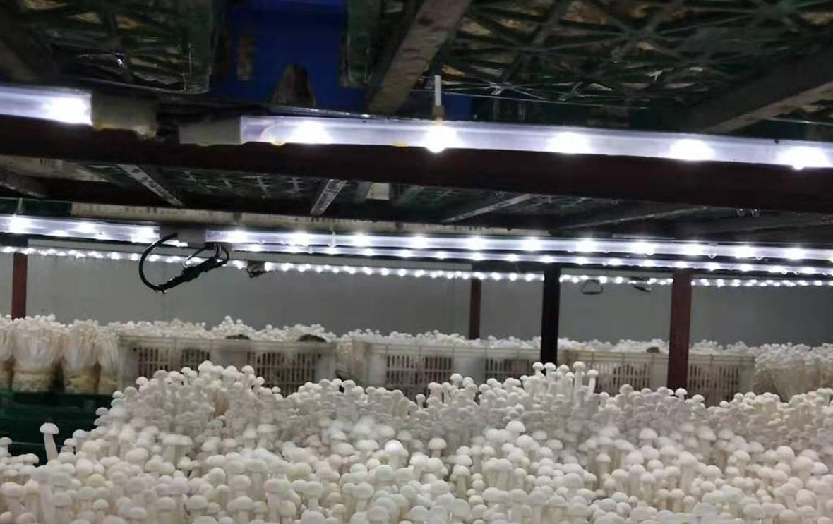食用菌培養室